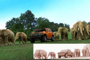 Hummer+elephants